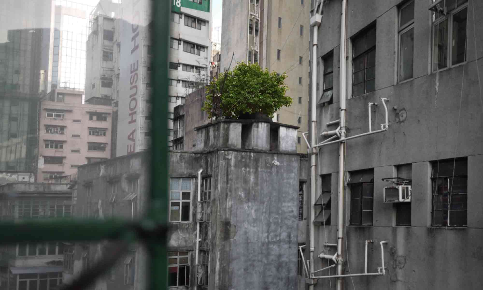 Save Rooftop Tree 23 Temple St